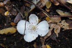 Flore de l\'Overland Track en Tasmanie