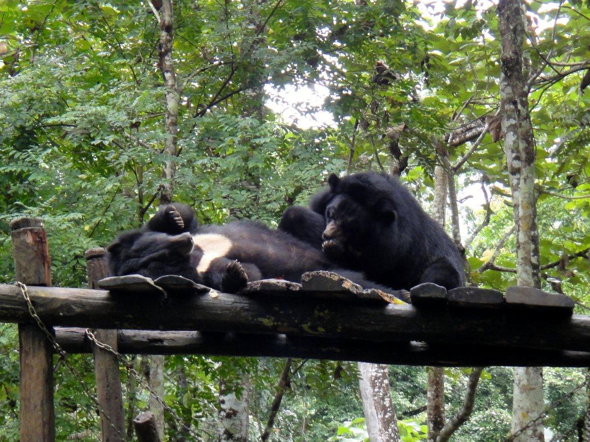 Les ours en pleine action