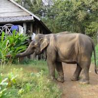 Le Laos, pays au million d'éléphants (2/2)
