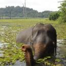 Le Laos, pays au million d'éléphants (1/2)