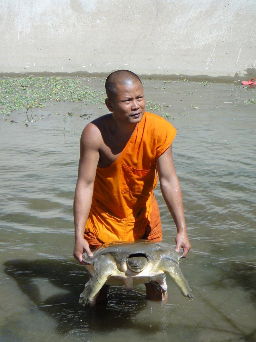 Un des moines avec une des plus grandes tortue du centre