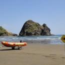 Plongée sur «Poor Knights Islands» et vieux Kauri